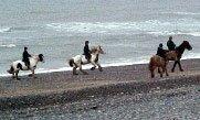 Horse riding on the beach.